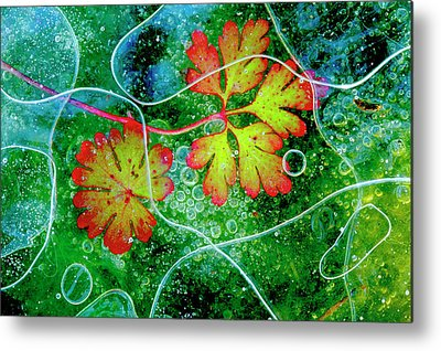 Geraniums Metal Prints