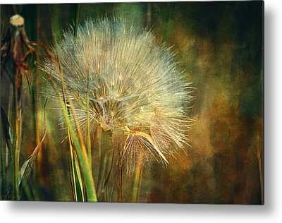 Close Focus Nature Scene Digital Art Metal Prints