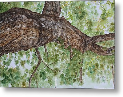 Realistic Rough Bark Paintings Metal Prints