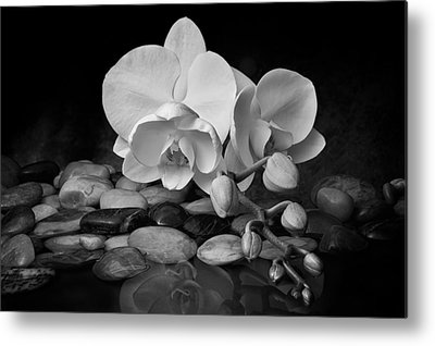 White Orchid Metal Prints