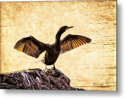 Cormorant Metal Prints