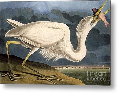 Great White Heron Metal Prints