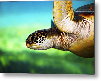Green Sea Turtle Photographs Metal Prints