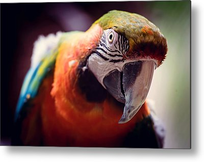 Parrot Photographs Metal Prints
