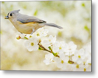Tufted Titmouse Metal Prints