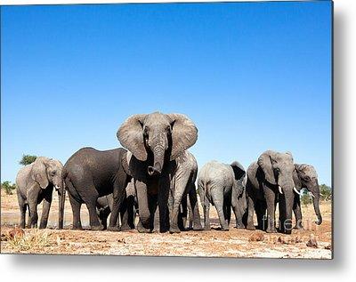 Chobe National Park Metal Prints