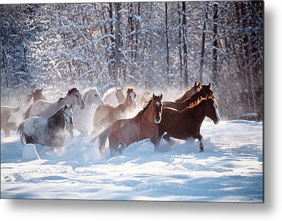 Herd Of Horses Metal Prints