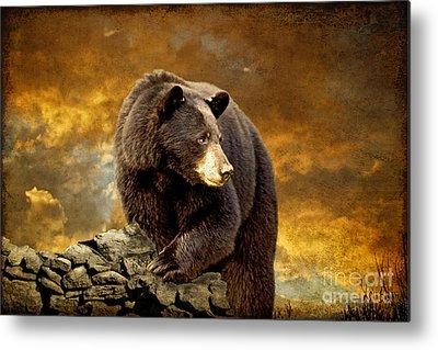 Brown Bear Metal Prints