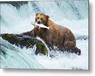 Designs Similar to Brown Bear On Alaska