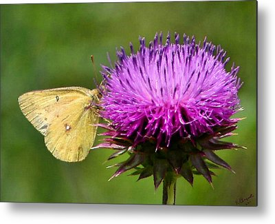 Flutterby Metal Prints