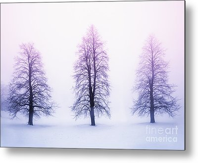 Winter Trees Metal Prints