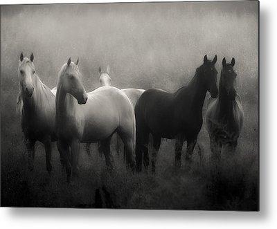 Horse Metal Prints