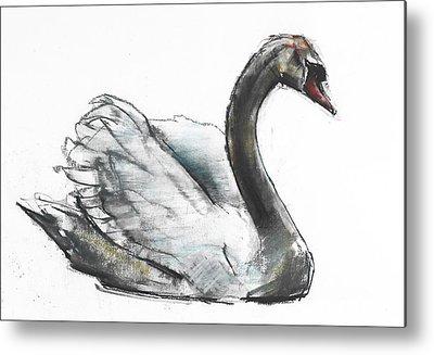 Swan Drawings Metal Prints