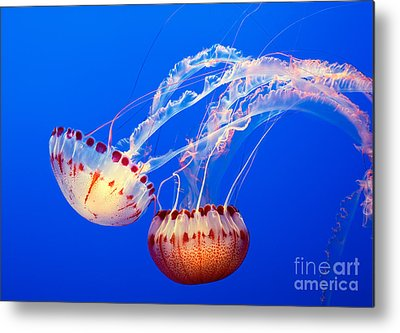 Jelly Fish Metal Prints