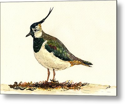 Lapwing Metal Prints