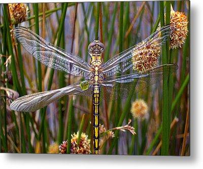 Dragonfly Metal Prints