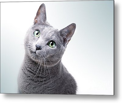 Domestic Cat Metal Prints