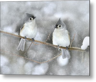 Titmouse Metal Prints