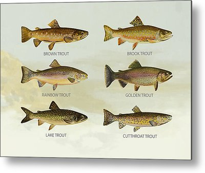 Rainbow Trout Digital Art Metal Prints