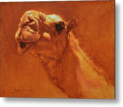 Camel Metal Prints