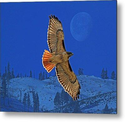 Hawk Photographs Metal Prints