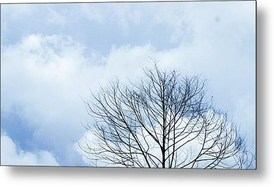 Winter Sky Metal Prints