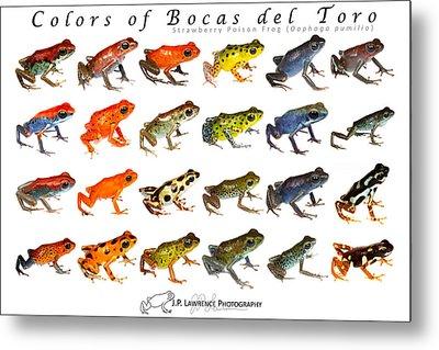 Dart Frogs Metal Prints