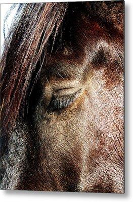 Beautiful Horse With A Tear-drop Photographs Metal Prints