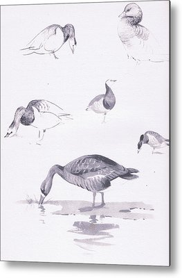 Goose Drawings Metal Prints