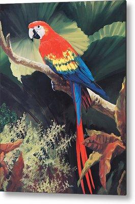 Parrot Paintings Metal Prints