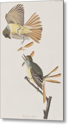 Flycatcher Metal Prints