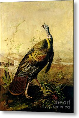 Wild Turkey Metal Prints