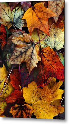 Fall Leaves Metal Prints