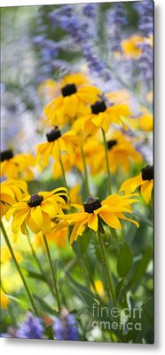 Abstracted Coneflowers Photographs Metal Prints