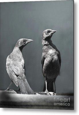 Blackbird Metal Prints