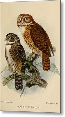 Pygmy Owl Metal Prints