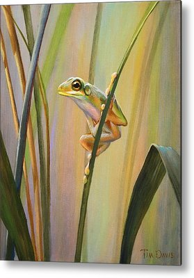 Frogs Metal Prints