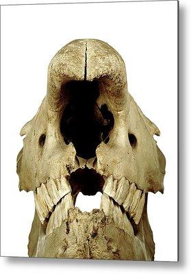 Rhinocerotidae Metal Prints