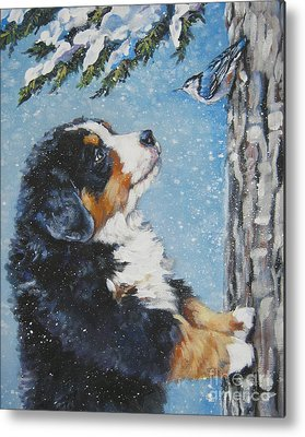 Bernese Mountain Dog Metal Prints