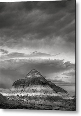 Petrified Forest Metal Prints