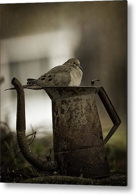 Mourning Dove Metal Prints