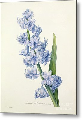 Designs Similar to Hyacinth