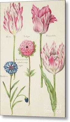 Tulip Paintings Metal Prints