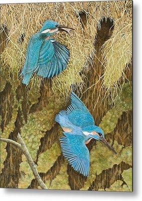 Kingfisher Metal Prints