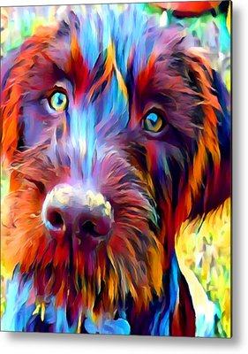 German Wirehaired Pointer Metal Prints
