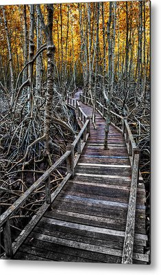 Mangrove Forest Metal Prints