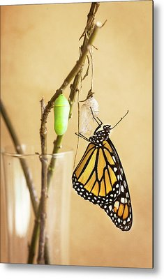 Designs Similar to Monarch Butterflies