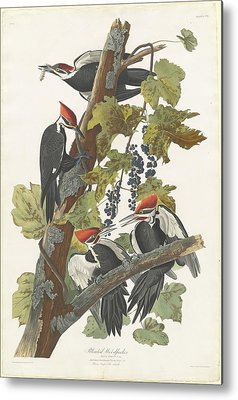 Woodpecker Metal Prints