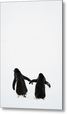 Antarctica Photographs Metal Prints