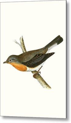 Flycatcher Metal Prints